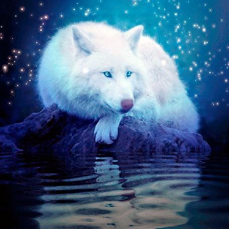 Анимация Белый волк лежит на камне у воды