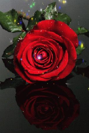 Анимация Красная роза в блестках