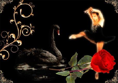 Анимация Девушка балерина и черный лебедь, плавающий в воде (© elenaiks), добавлено: 28.03.2015 06:22