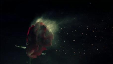Анимация С розы слетают лепестки (© zmeiy), добавлено: 28.03.2015 10:54
