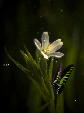 Анимация На белом цветке сидит бабочка (© chucha), добавлено: 28.03.2015 11:27