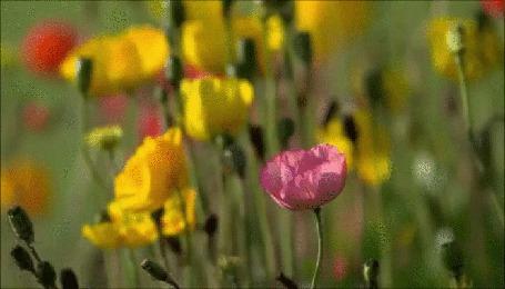 Анимация Цветы, ласкаемые легким ветерком