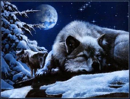 Анимация Тоскующий волк лежит на снегу, над ним в небе, на фоне полной луны, бегущий волк