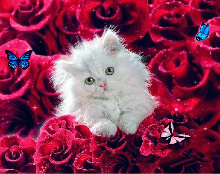 Анимация Белая кошечка с зелеными глазами сидящая в красных розах