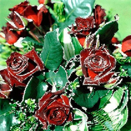 Анимация Красные розы с листьями (© elenaiks), добавлено: 31.03.2015 09:38