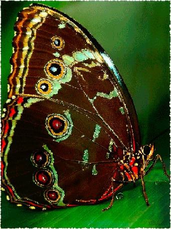 Анимация Красивая сверкающая бабочка (© Morena), добавлено: 31.03.2015 12:14