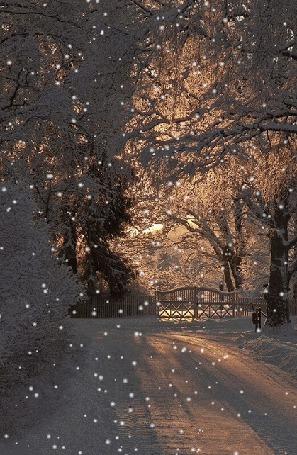 Анимация Вид на зимнюю дорогу и заснеженные деревья, которые засыпает снег (© Morena), добавлено: 31.03.2015 12:53