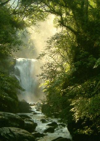 Анимация Небольшой водопад в зеленой лесной чаще (© Morena), добавлено: 31.03.2015 12:58
