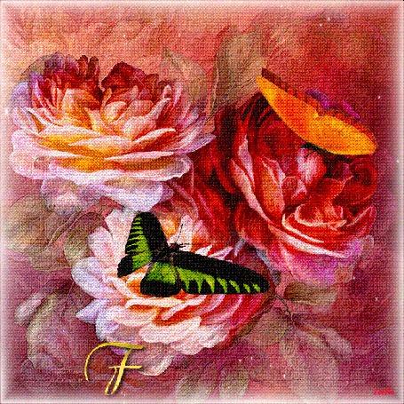 Анимация На розовых пионах сидят две бабочки (For you!/Для тебя!) (© Svetlana), добавлено: 01.03.2015 03:59