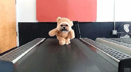 Анимация Собака в костюме медведя идет по беговой дорожке (© Seona), добавлено: 02.03.2015 00:25