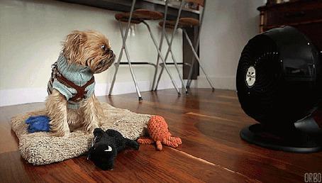 Анимация Собака сидит напротив вентилятора