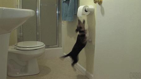 Анимация Щенок бигля пытается достать туалетную бумагу