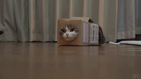 Анимация Мару спрятался в коробке (© Seona), добавлено: 02.03.2015 00:39