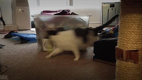 Анимация Кошка играет сама с собой, бегая вокруг коробки (© Seona), добавлено: 02.03.2015 00:40