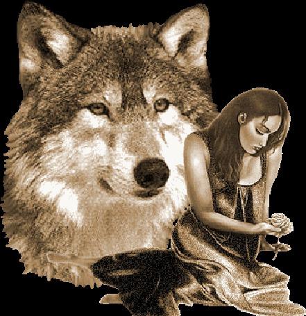Анимация Девушка рядом с волком (© Anatol), добавлено: 02.03.2015 00:59