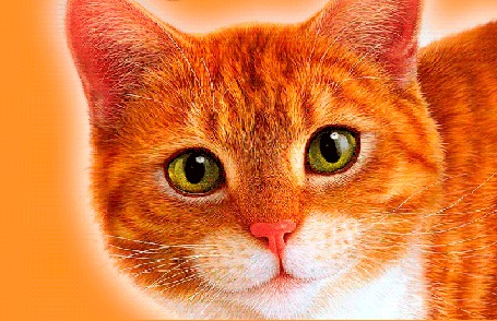Анимация Рыжая кошка смотрит зелеными глазами