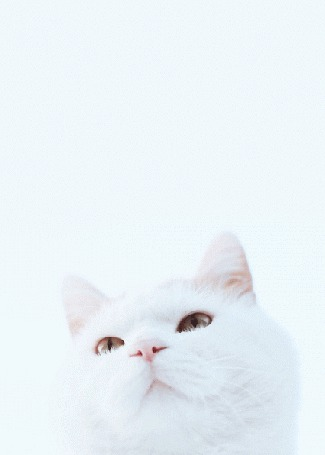 Анимация Моргающий белый кот