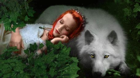Анимация Девушка спит, опираясь на белого арктического волка (© Bezchyfstv), добавлено: 03.03.2015 00:25
