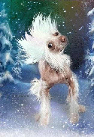 Анимация Белый стриженный пудель танцует на заснеженной дорожке