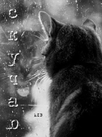Анимация Кошка смотрит на дождь за окном (скучаю)