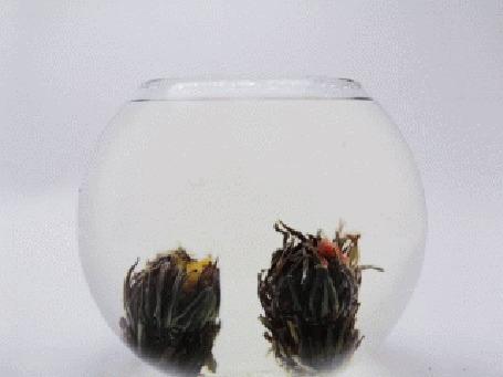 Анимация В круглом аквариуме вялые цветы, которые оживают и раскрашивают все яркими красками