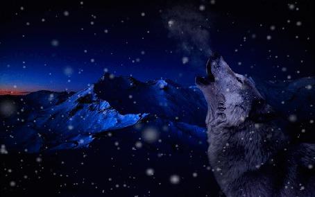 Анимация Волк на фоне гор
