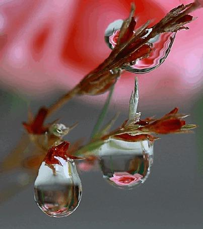 Анимация Капли воды на весенней ветке с отражением цветов в них