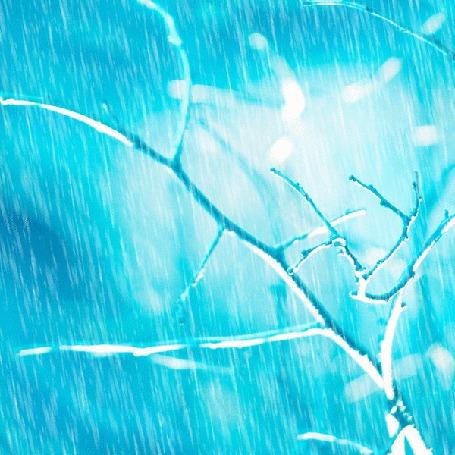Анимация Ветки дерева под дождем (© zmeiy), добавлено: 04.03.2015 00:11