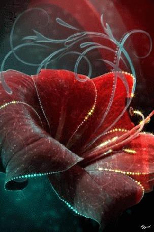 Анимация Красный переваливающийся цветок