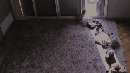 Анимация Коты в комнате дружно перемещаются за солнцем, освещающим комнату через дверной проем (© Anatol), добавлено: 04.03.2015 00:40