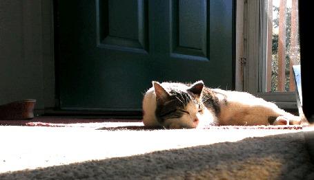 Анимация Кошка безмятежно спит в комнате на ковре, лишь изредка поводя во сне ушами (© Anatol), добавлено: 04.03.2015 16:09