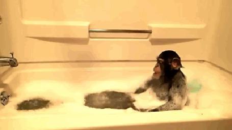 Анимация Маленькая обезьянка моется в ванне