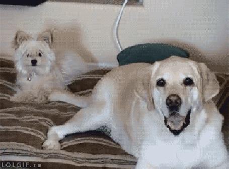 Анимация Хвост собаки работает, как вентилятор