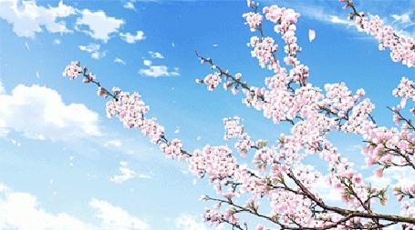 Анимация Весенние лепестки сакуры слетают с деревьев