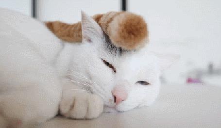 Анимация На голове белого кота лежит хвост рыжего кота