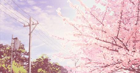 Анимация Опадающие весенние лепестки (© zmeiy), добавлено: 06.03.2015 09:51