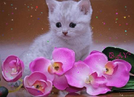 Анимация Около сидящего котенка лежит веточка цветущей орхидеи, вокруг мерцание и падает конфетти