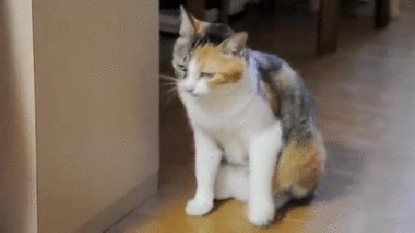 Анимация Полусонная кошка прислоняется к стенке, но промахивается и падает (© Anatol), добавлено: 07.03.2015 00:33