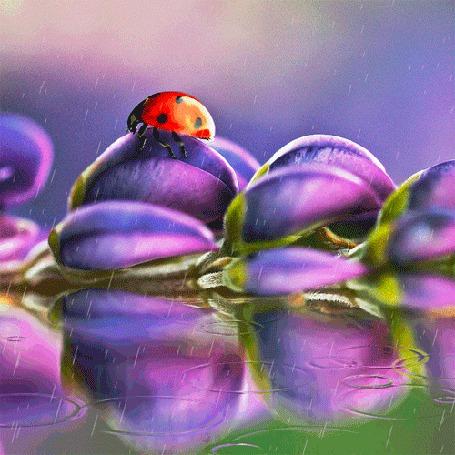 Анимация Божья коровка сидит на сиреневом цветке лежащим в воде, идет дождь (© Arinka jini), добавлено: 07.03.2015 01:03