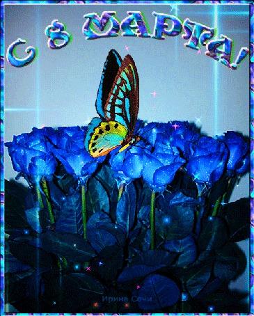 Анимация На голубых розах сидит бабочка (С 8 Марта!) (© Svetlana), добавлено: 07.03.2015 05:38