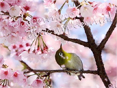 Анимация Птичка сидит на цветущей веточке под падающими лепестками, Весеннего настроения