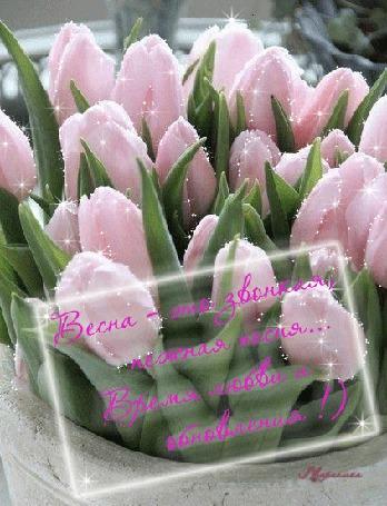 Анимация Открытка Букет тюльпанов в вазоне (Весна это звонкая, нежная песня. Время любви и обновления!)
