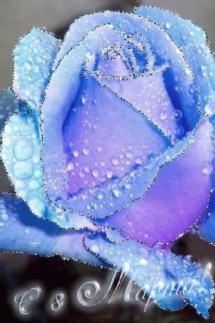 Анимация Голубая роза / с 8марта! (© zlaya), добавлено: 07.03.2015 20:18