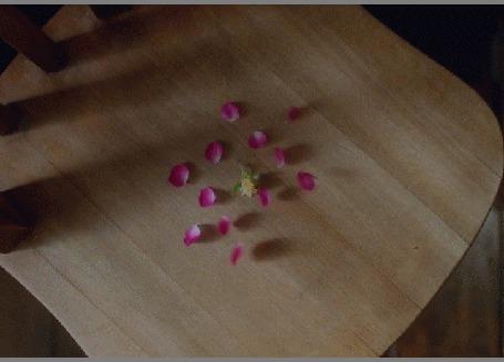 Анимация Лепестки разлетаются от сердцевины по стулу