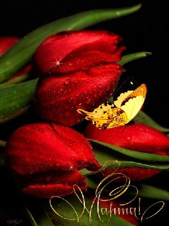 Анимация На красных тюльпанах в капельках росы, сидит желтая бабочка (8 Марта!)