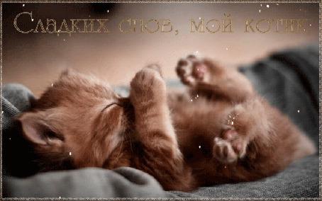 Анимация Спящий котенок / сладких снов (© zlaya), добавлено: 08.03.2015 11:59