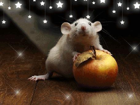 Анимация Белая крыса с яблоком