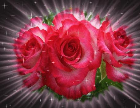 Анимация От трех красных роз расходятся лучи. По всему фону сверкают блестки