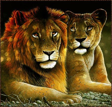 Анимация Лев с львицей