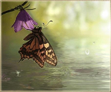 Анимация Бабочка, сидящая на цветке, вздрагивает от падающей в воду капли